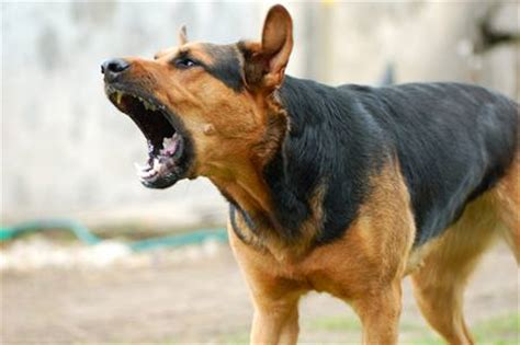 how to a to bark at intruders stop barking tips for curbing excessive barking