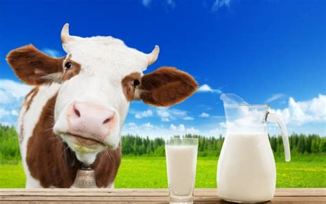 Do You Care If Your Or Milk Comes From Cloned Animals by Does All Milk Come From Cows Wonderopolis