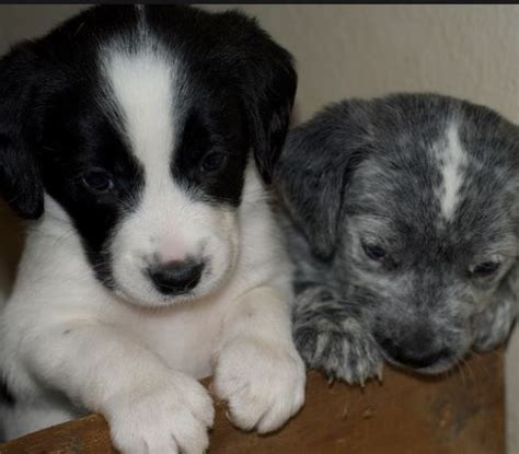 how many puppies in a litter can a litter of puppies can more than one daily discoveries