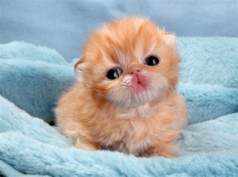 Kittys New Do by 50 Incredibly Baby Animal Pictures Around The World