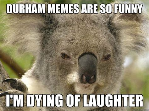 Koala Meme - durham memes are so funny i m dying of laughter serious
