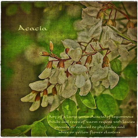 marmellata di fiori di acacia marmellata di fiori d acacia crumpets co