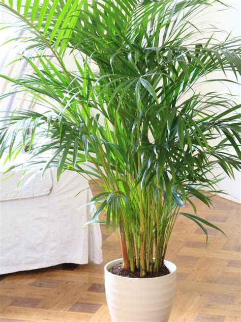 best indoor plants little light house plants that need little light home mansion