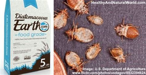 will diatomaceous earth kill bed bugs home garden archives healthy and natural world