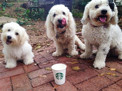 is a puppuccino for your lifetime with dogs dogs rule and dogs are