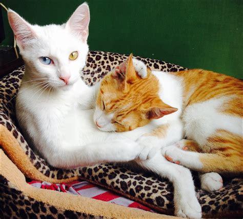imagenes increibles de gatos imagenes de gatos imagenes y fondos