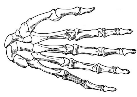free coloring pages of bones of the hand