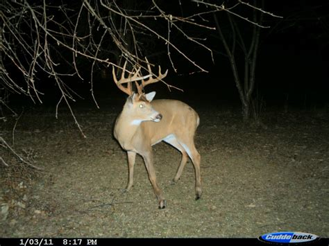 351 best images about deer caught on trail cam on