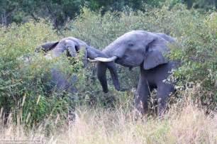Elephant Matting by Elephant