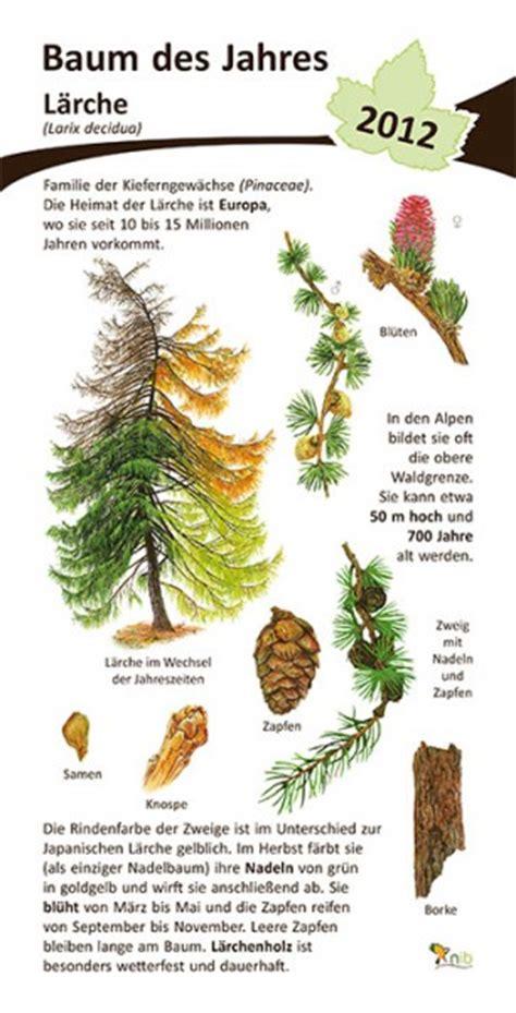 Baum Des Jahres 2012 5368 by L 228 Rche Baum Des Jahres 2012 15x30 Cm Pflanzen