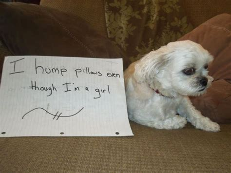 Humps Pillow To by Shaming Humps Pillows Dogs And Cats