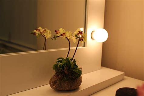 orchidea in vaso cura come realizzare mini orchidee cura orchidee consigli