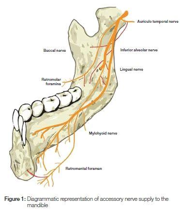inferior alveolar nerve block overview indications contraindications