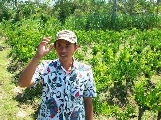 Bibit Jeruk Nipis Jumbo Tanpa Biji peluang dan prospek usaha bisnis budidaya jeruk nipis