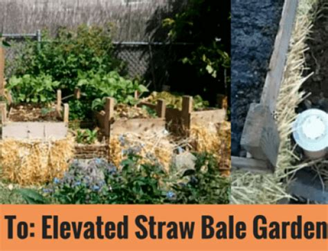 Straw Bale Garden Layout Idea Straw Bale Garden Bed Santa Rosa Ca Zumbido Vida Endangered Mayan Bee Sanctuary