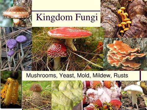 exle of fungi image