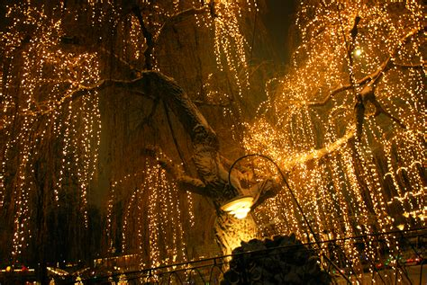 Tree Lighting In Tivoli Light Tree