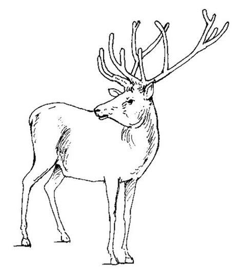 coloring pages of deer bucks buck deer head coloring page search results calendar 2015