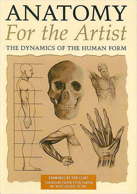 anatomy for the artist anatomy for the artist the dynamics of the human form