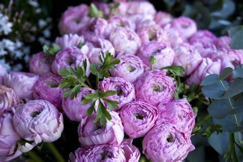 what color flowers for new year pivoine signification des fleurs