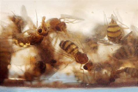 kleine weiße würmer im stuhl k 252 che kleine weisse raupen k 252 che kleine weisse at kleine