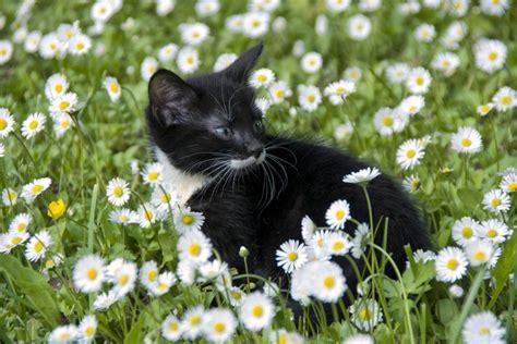 130 Cats Is Way Many by ромашка одно из 7 ми священных растений обсуждение