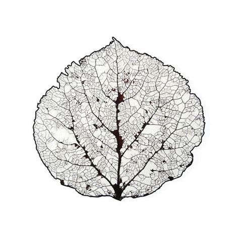 printable skeleton leaves 25 best ideas about leaf skeleton on pinterest leaf art