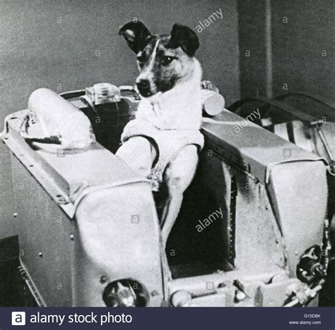 laika the in space laika the canine in space inside a mock up of the cabin of stock photo