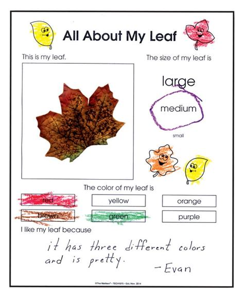 kindergarten activities with leaves 17 best images about fall in kindergarten on pinterest
