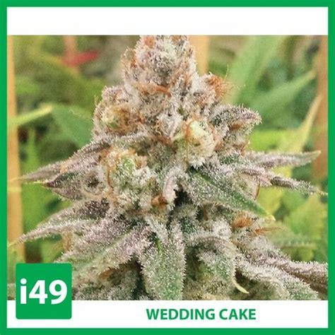 buy wedding cake seeds  wedding cake strain
