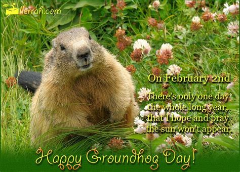 happy groundhog day pictures   images