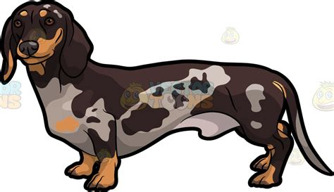 spotted dachshund puppies a spotted dachshund vector clip