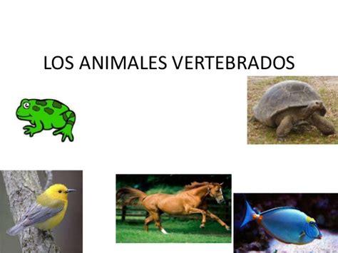 los animales vertebrados los animales vertebrados
