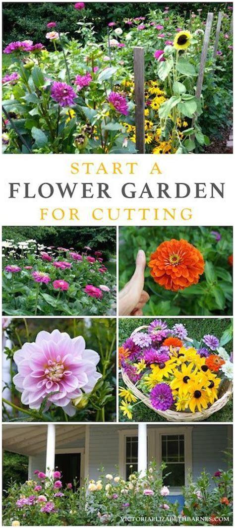 cuttings hardy plants and zinnias on pinterest