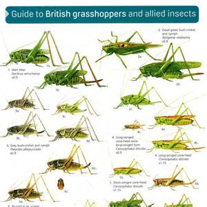 Make Your Own House Games british grasshoppers peoples trust for endangered species