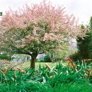 arbuste jardin decoratif