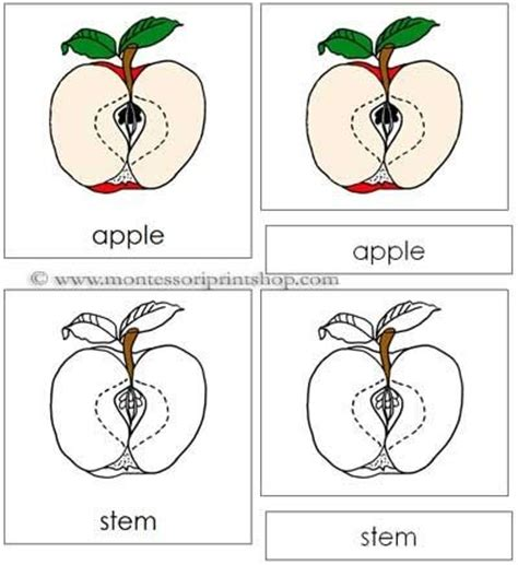 Template For Montessori Nomenclature Cards by Apple Nomenclature Cards Montessori Parts Of An Apple