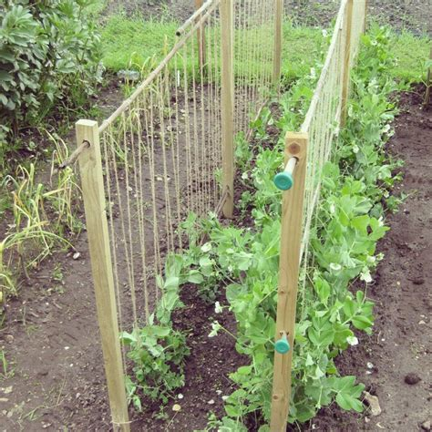 Homemade Pea Supports Www Lavenderandleeks Co Uk Garden Allotment Ideas