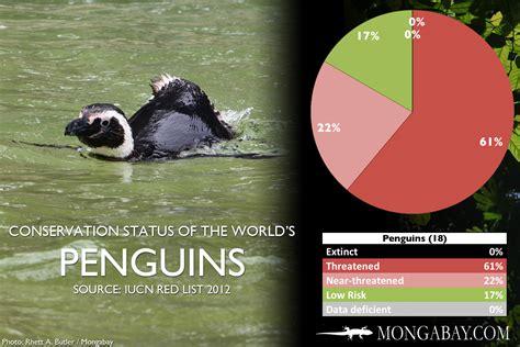 CHART: The world's most endangered penguins