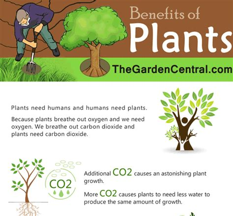 benefits of house plants benefits of house plants benefits of house plants benefits
