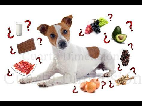 los alimentos mas peligrosos  los perros top  alimentos prohibidos youtube