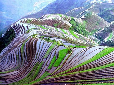 beautify worldwide rice fields china feel the planet