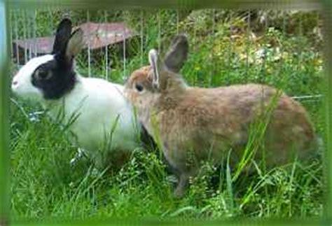 Hasen Im Garten by Kaninchen Info Kinderseite Garten