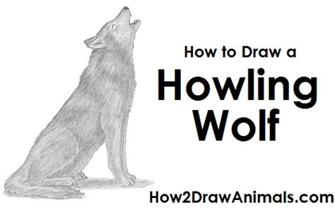 yorkie howling how to draw a wolf howling