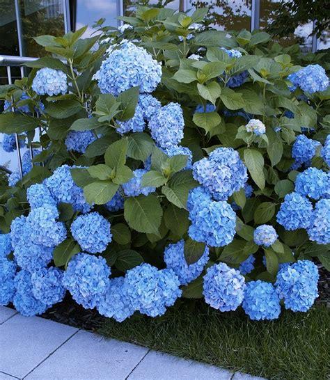 pianta fiorita tutto l anno piante da ombra guida completa per un giardino fiorito
