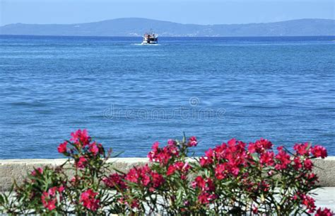 i fiori mare mare e fiori immagine stock immagine di nessuno
