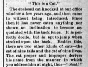 Essay About Cats by 1881 Humpty Dumpty And The Featured Felines Of New York City S Cat Congress On Broadway The