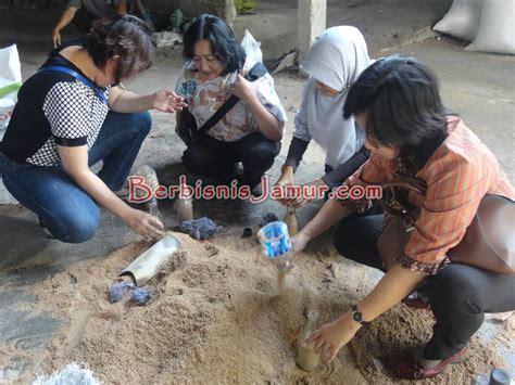 Bibit F3 Jamur Tiram budidaya jamur tiram bersama mompreneur