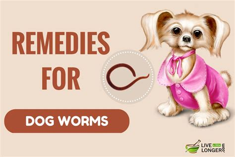 home remedies for worms in puppies 10 best home remedies for worms in dogs