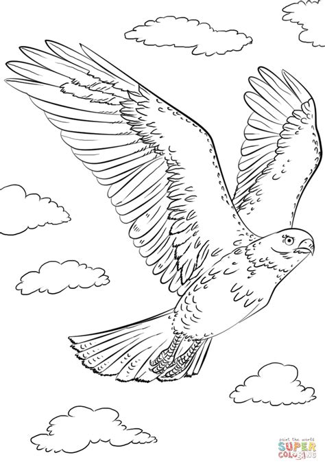 red tailed hawk in flyght coloring page free printable